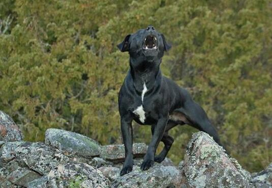 What Do Dog barking Symbolize in Dreams and How to Interpret the Meaning