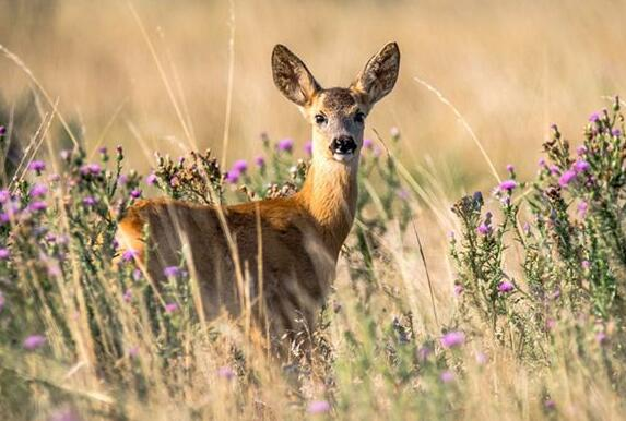 What Do Deer rabbit Symbolize in Dreams and How to Interpret the Meaning