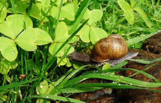 What Do River Snail Symbolize in Dreams and How to Interpret the Meaning