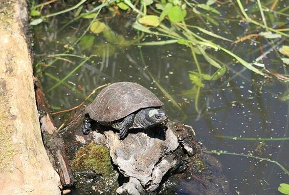 Dreaming of a case study of turtles