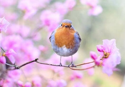 A case study of dreaming of birdsong