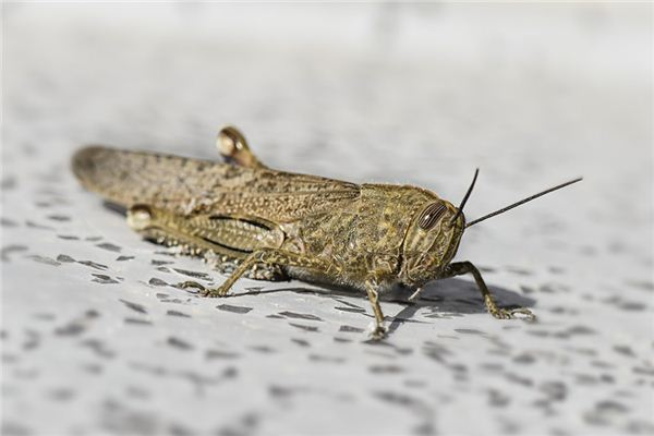 Dream Case Study of Grasshopper
