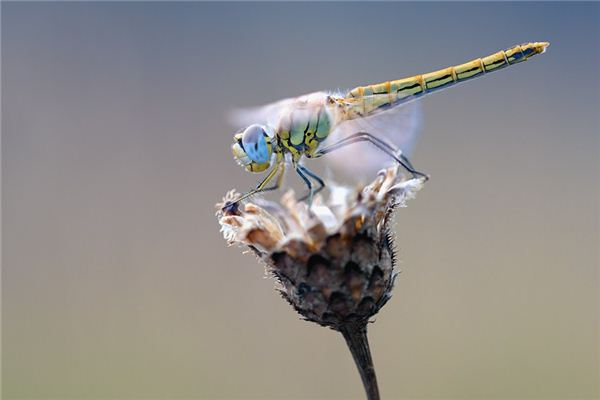 Case Study of Dreaming of Catch Dragonfly