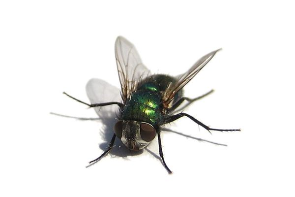 Case Study of Dreaming of Flies