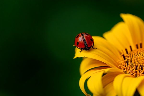 Case Study of Dreaming Beetle