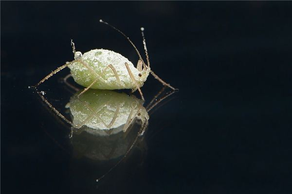 Case study of dreaming of lice