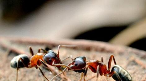 Case Study Dreaming of Two Ants Fighting