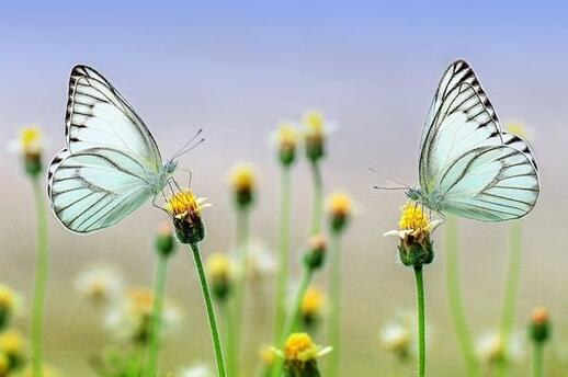 Case Study of Dreaming of Hunting Butterflies