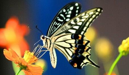 Case study of dreaming of butterflies flying in flowers