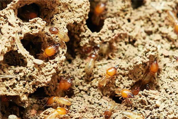 Case study of dreaming termites