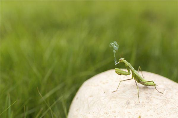 Dream Mantis Case Study