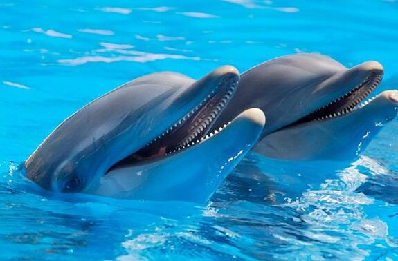 Case Study of Dreaming of a Dolphin