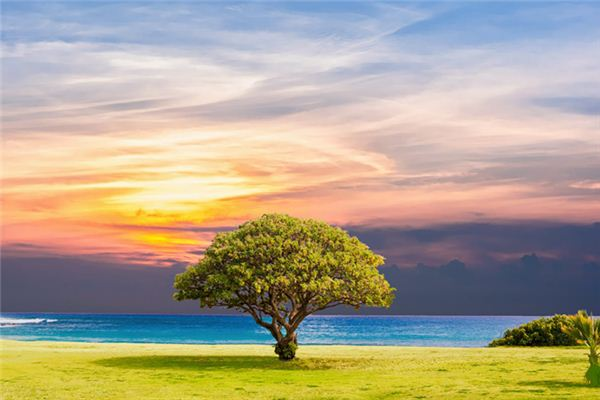 The meaning and symbol of tree in dream