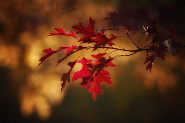 The meaning and symbol of Leaves in dream