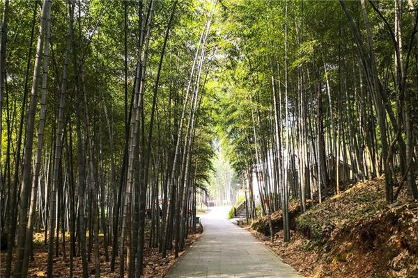 The meaning and symbol of bamboo in dream