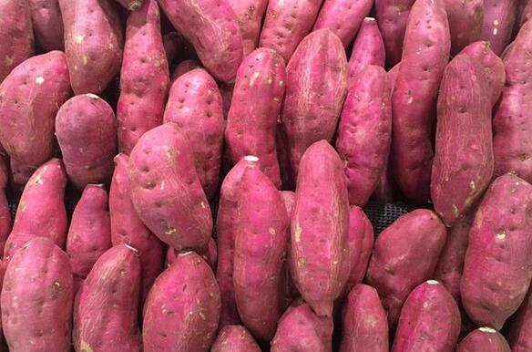 Dream Case Study of Sweet Potato