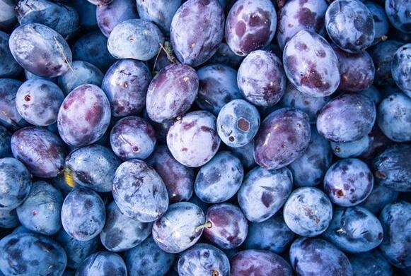 Case Study of Dreaming of Plums