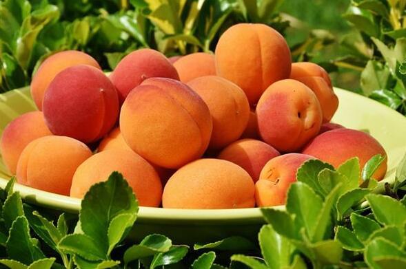 Dream case study of apricot