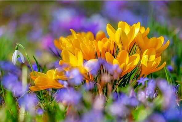 The meaning and symbol of Saffron in dream