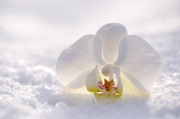 The meaning and symbol of Gardenia in dream