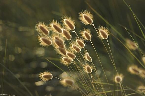 The meaning and symbol of Weeds in dream