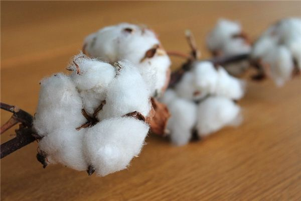 The meaning and symbol of cotton in dream