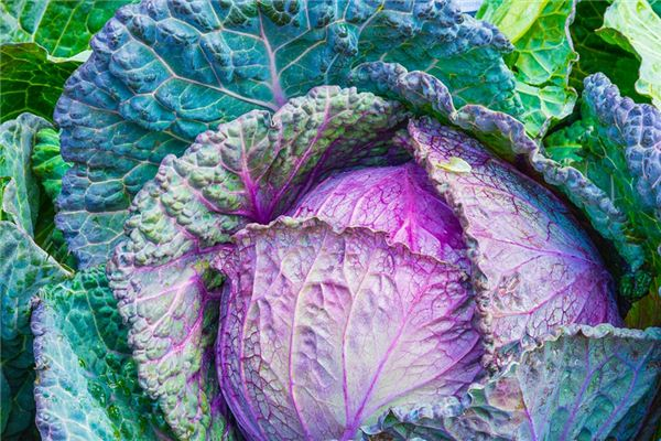 The meaning and symbol of cabbage in dream