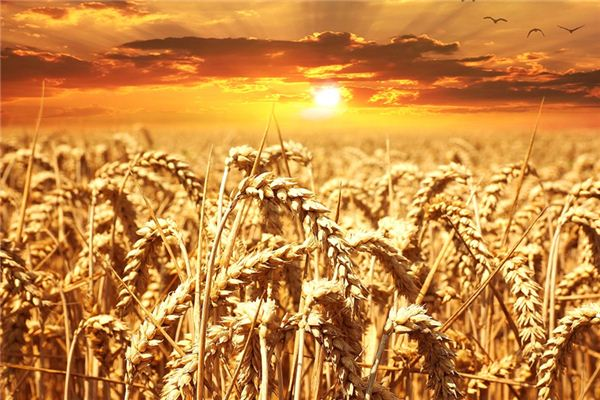 The meaning and symbol of cereals in dream