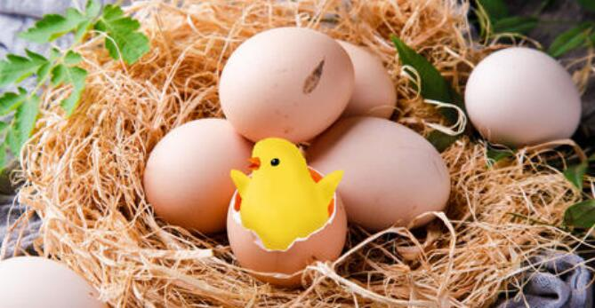 The meaning and symbol of Pick up a lot of eggs in dream