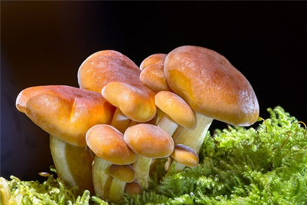 The meaning and symbol of Buy mushrooms in dream