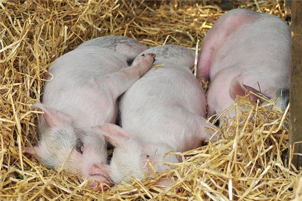 The meaning and symbol of Feed your own pigs in dream