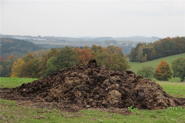 The meaning and symbol of Pick big dung in dream