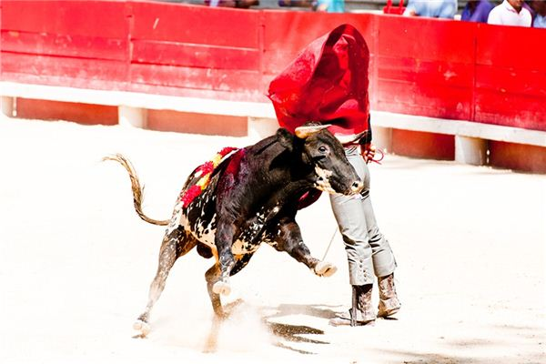 What is the meaning and symbol of bullfighting in the dream?