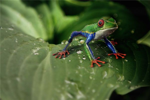 The meaning and symbol of eating frogs in dreams